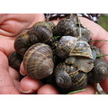 caracoles snails hands manos