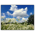 clouds sky wildflowers