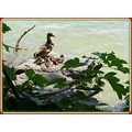 duck family beach lake leman geneva switzerland