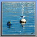 Bird reflection malta znuber sea water