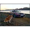dog nature lake animal car Iceland evening road path beach water