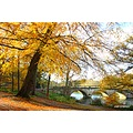 Autumn Clumber park