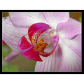 flower orchid nature macro