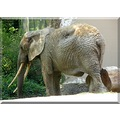 switzerland basel zoo animal elephant switx basex zoox animx elepx