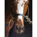 racehorse thoroughbred colt horse animal equine