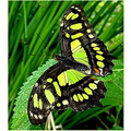 butterfly localbutterfly house florida