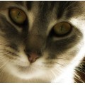 Canon Powershot A620 cat eyes