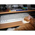 cat pc keyboard midas home