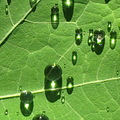 reflectionthursday leaf raindrop sunlight