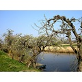 netherlands acquoy landscape tree water nethx acqux landn waten treex