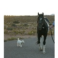 stud stallion paint chelsea topper dog bischone utah