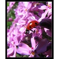 macro nature animal pink red
