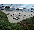 beach ocean big sur seals