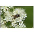 flower plant fly