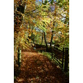 autumn warkleigh devon trees gate landscape