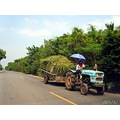 landscape nature thailand poulets 2007 rural carshot vehicle