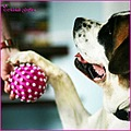 holly dog saint bernard ball pink