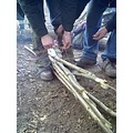 coppicing knots bundles worcestershire wood hazel