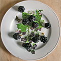 blackberry blackberries summer fruit food foodfph garden gardenfph