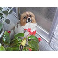my doggy near flower