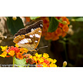 Wildlife Nature Butterfly close up