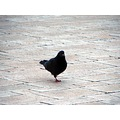 Wawel Castle Color Krakow floor bird