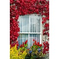 window windowclub flowers Carlow Ireland