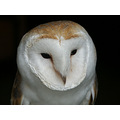 captivelight miles herbert nature wildlife owl