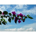 flowers branch tree tropical floating