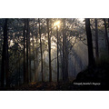 anshi forest dawn sun rays karnataka india