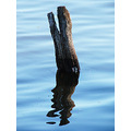 reflectionthursday tree stump swan river perth littleollie