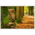 Autumn Lane Trees Sony Alpha SonyAlpha A700 mushrooms Herbst Herfst