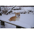 Winter animal dog