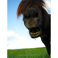 laughorse situations brodel