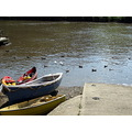 river boats ducks calstock