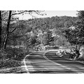 mountain road tree landscape perspective bw park autumn
