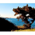 sea blue tree sky greece lagonisi