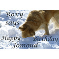 stlouis us art winnipeg canada happy birthday jomoud 020909 Roxy dog 2009