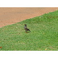 bird in the park near Waikiki