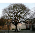 big tree the hague holland jolie jeever