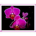 orchid plant flower DentistOffice aloha Oregon