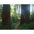 Redwood Sentries