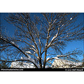 stlouis missouri us usa winter snow tree sky blue 10in 25cm yay 012011