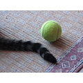 cinzia cat tail ball