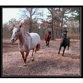 Farm Paparazzi caroline everitt horse gallop albany ga funny cute girls