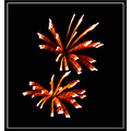 fireworks holiday Independence