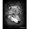 wolf wilddog animal photoshop lillianna