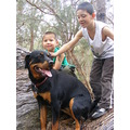 children kids rottweiler animal pet family