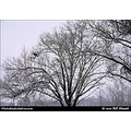 stlouis missouri us usa winter snow trees bare WPS 121610