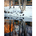 winter snow water canal birch tree house wall reflection reflectionthursday